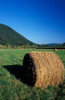 Hay Bales in Litchfield Hills, Connecticut Fine-Art Print