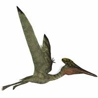 Pterodactylus Flying Reptile Fine-Art Print