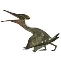 Flying Pterodactylus  Reptile Fine-Art Print