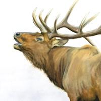 Majestic Elk Brown Crop Fine-Art Print