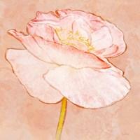 Sweet Peach Poppy I Fine-Art Print