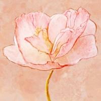 Sweet Peach Poppy III Fine-Art Print