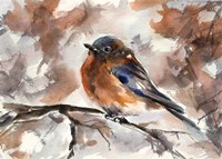 Robin on Branch Fine-Art Print
