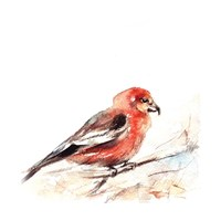 Red Breasted III Fine-Art Print