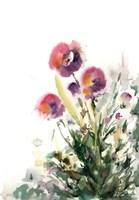 Pansy Patch Fine-Art Print