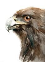 Bird of Prey Fine-Art Print