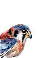 Bird of Prey II Fine-Art Print