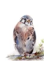 Bird of Prey III Fine-Art Print