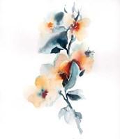 Pretty in Peach II Fine-Art Print