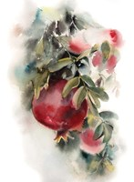 Pomegranate Fine-Art Print