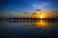 Sunset Camel Ride Fine-Art Print