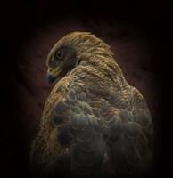 Somebody Watch Me-Savanna Hawk Fine-Art Print