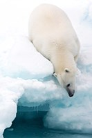 Arctic Composition Fine-Art Print