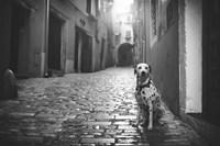 The Lost Dog Fine-Art Print