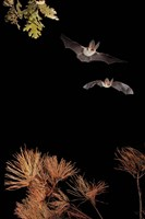 Bats And Halloween Fine-Art Print