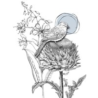 Graphite Bird And Thistle Fine-Art Print