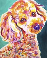 Poodle - Curly Fine-Art Print