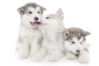 Puppies 1 Fine-Art Print