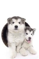 Puppies 2 Fine-Art Print
