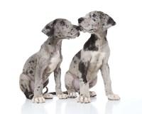 Puppies 4 Fine-Art Print