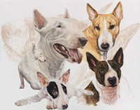 Bull Terrier with Ghost Image Fine-Art Print