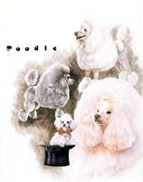 Poodle 2 Fine-Art Print