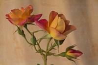 Peachy Rose 2 Fine-Art Print