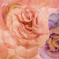 Rosa Cuadrada Fine-Art Print