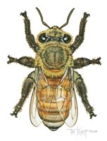 Worker Honey Bee Fine-Art Print