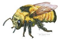 Bumble Bee Fine-Art Print