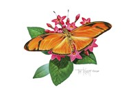 Julia Butterfly Fine-Art Print