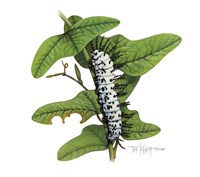 Zebra Caterpillar Fine-Art Print