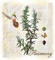 Rosemary Herb Fine-Art Print