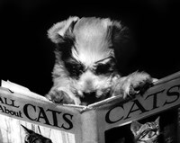 All About Cats Fine-Art Print