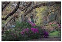 Oaks and Azaleas Fine-Art Print