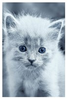 Blue Kitty Fine-Art Print