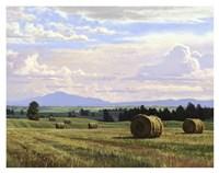 Fresh Cut Hay Fine-Art Print