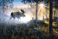 Walk in the Mist Fine-Art Print