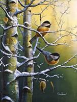 Winter Refuge Chickadees Fine-Art Print