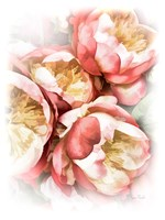 Peach Peony Fine-Art Print