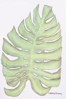 Fern Frond Fine-Art Print