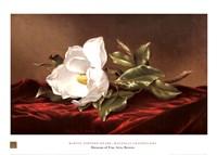 Magnolia Grandiflora Fine-Art Print