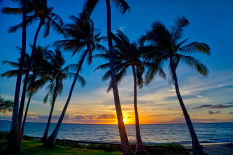 Framed Sunset And Silhouetted Palm Trees, Kihei, Maui, Hawaii Print