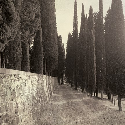 Framed Tuscan Cypress Row Print