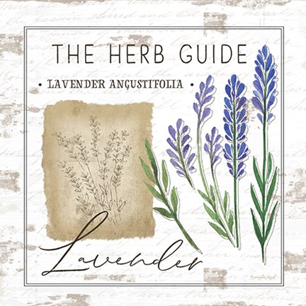 Framed Herb Guide - Lavender Print