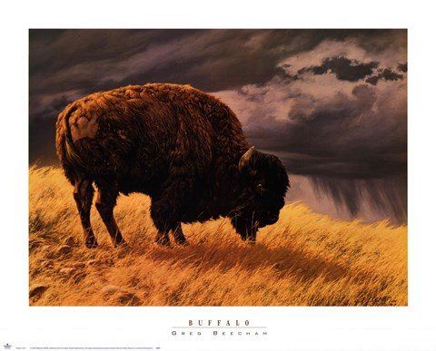 Framed Buffalo Print
