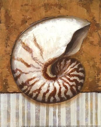 Framed Vintage Shell I - mini Print
