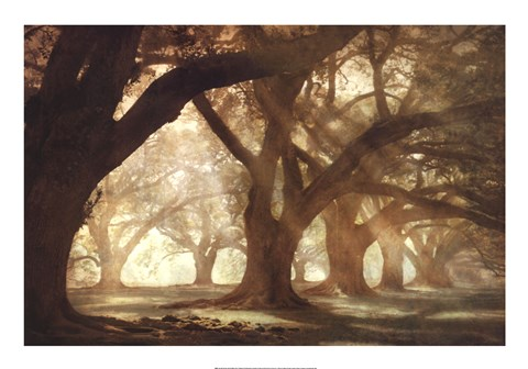 Framed Oak Alley Morning Light Print