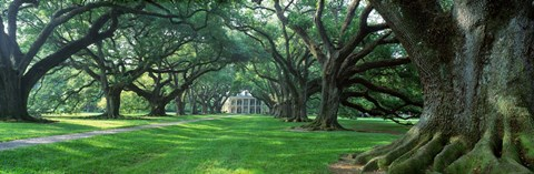 Framed USA, Louisiana, New Orleans, Oak Alley Plantation, plantation home through alley of oak trees Print