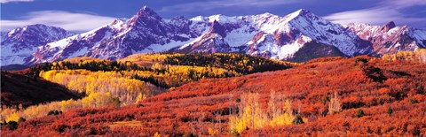 Framed Forest in autumn with snow covered mountains in the background, Telluride, San Miguel County, Colorado, USA Print